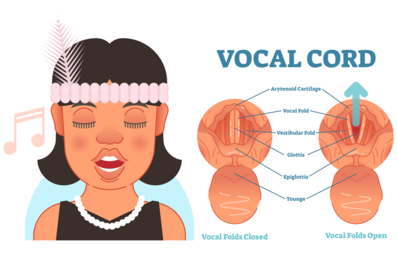 showing how vocal cords work with a singer.